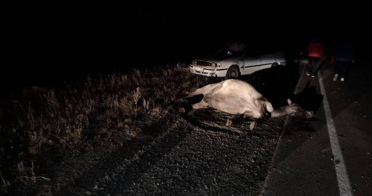 «Нексия» насмерть сбила двух лошадей на трассе