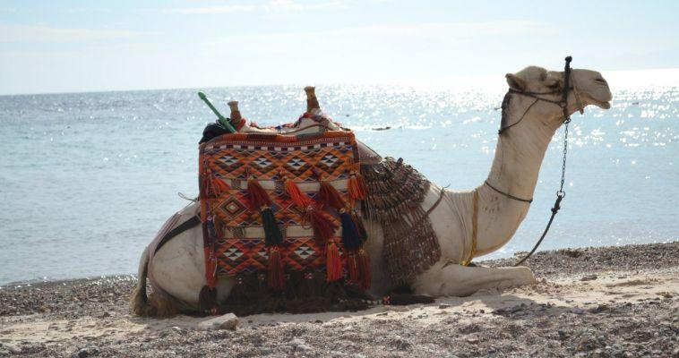 Россия готова возобновить полёты на египетские курорты