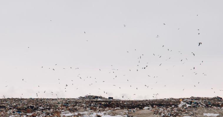 Челябинская область оказалась в числе отстающих по расчистке свалок