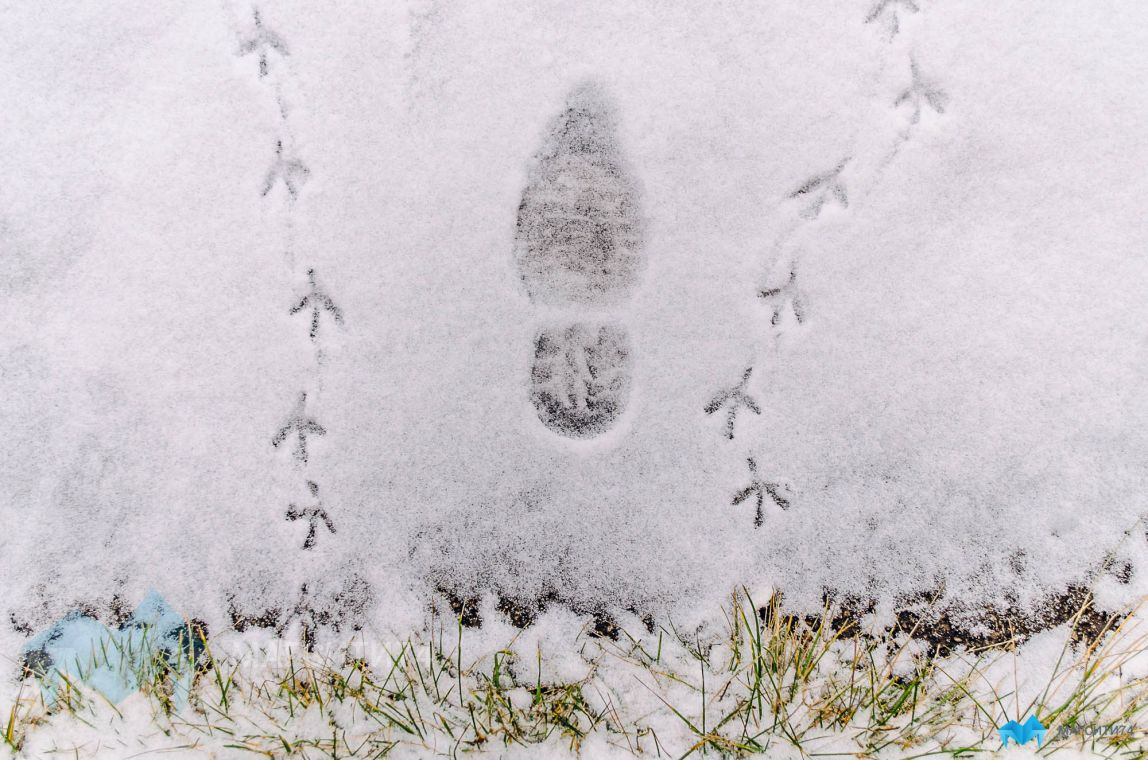 Снега магнитогорцы не дождутся до конца недели