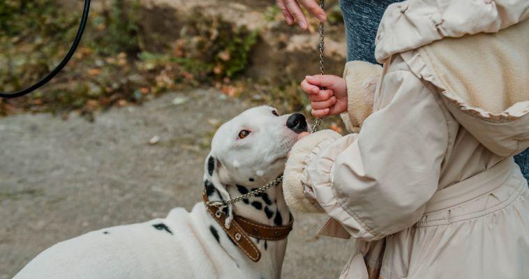 Защитники животных столкнулись с мошенниками