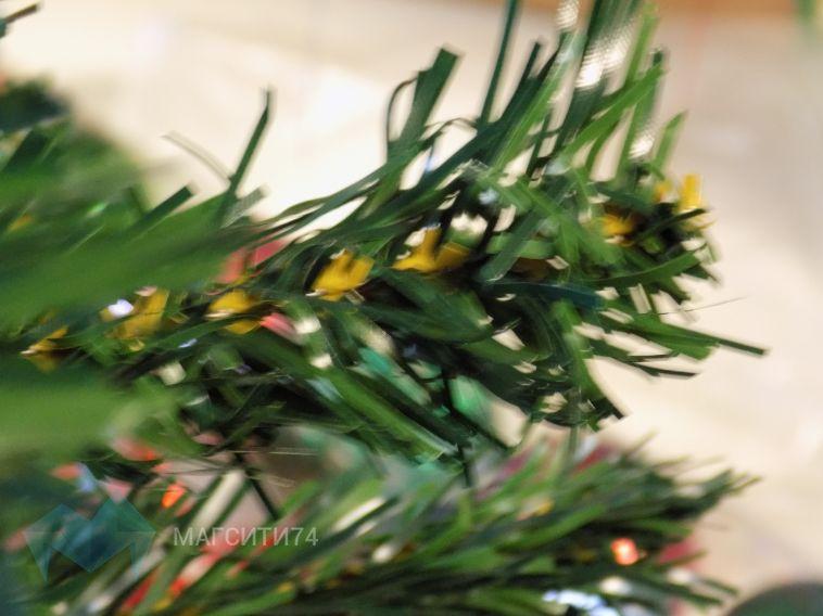 Экологи выступают за живую ель на Новый год