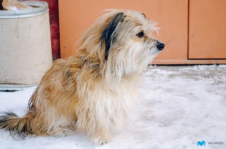 В России приняли закон, который защитит животных