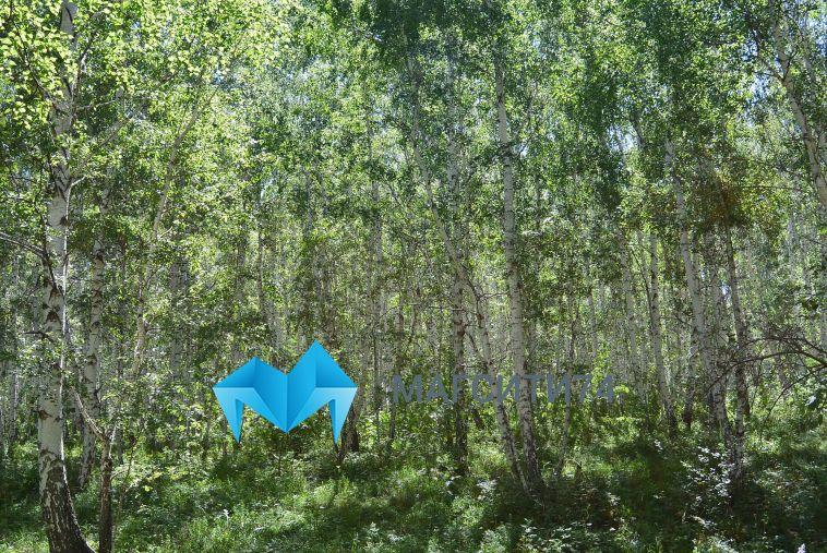 За прошедшую неделю в лесах Челябинской области потерялись девять грибников