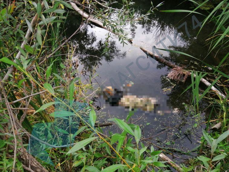 «Не смогли определить даже пол»: магнитогорский рыбак обнаружил сгнившее тело в реке