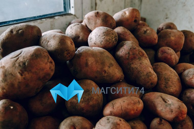 Магнитогорцы приобрели на сезонных ярмарках более пятисот тонн овощей