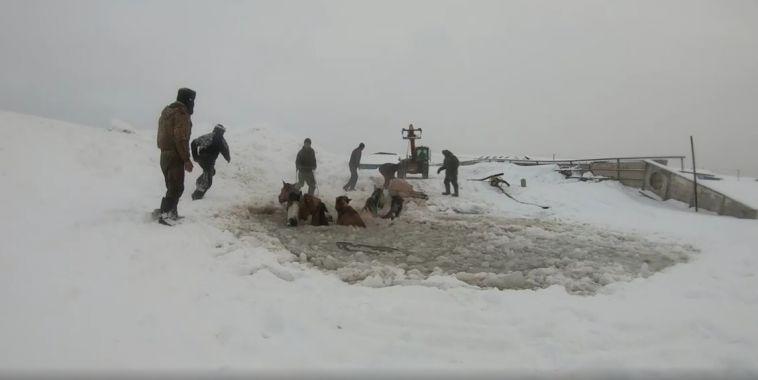 ВБашкирии спасение лошадей, провалившихся под лёд, попало навидео