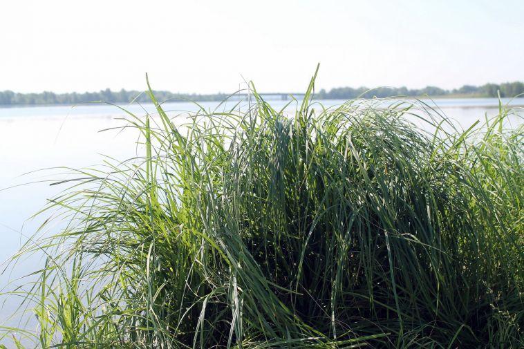 Мгновенная смерть у воды. Алкогольные посиделки закончились трагично в Магнитогорске