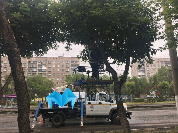 В Магнитогорске на центральных улицах ведётся ежедневная работа по обрезке деревьев