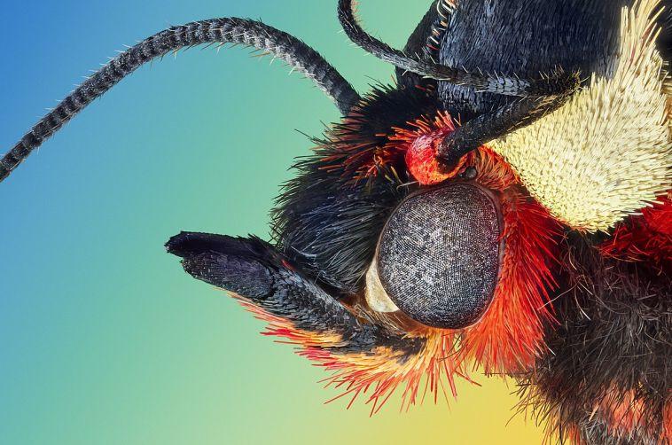 Жительница Магнитогорска вновь стала победительницей фотоконкурса со снимками гигантских насекомых