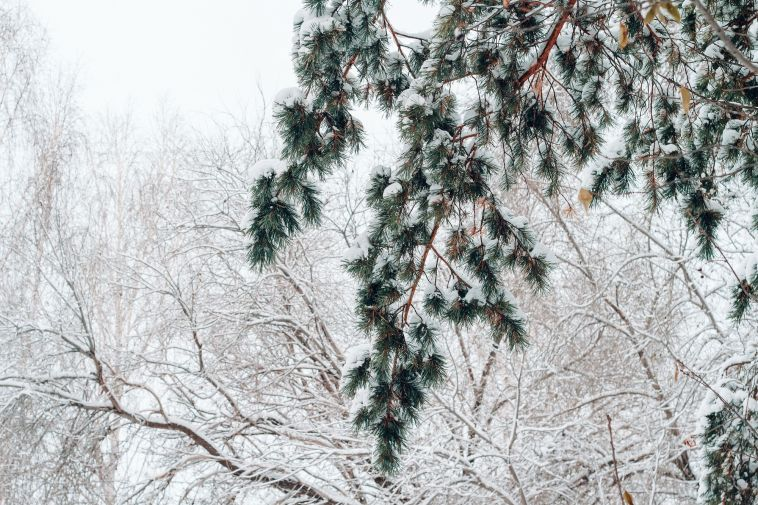 Магнитогорск— всписке популярных направлений для зимнего отдыха
