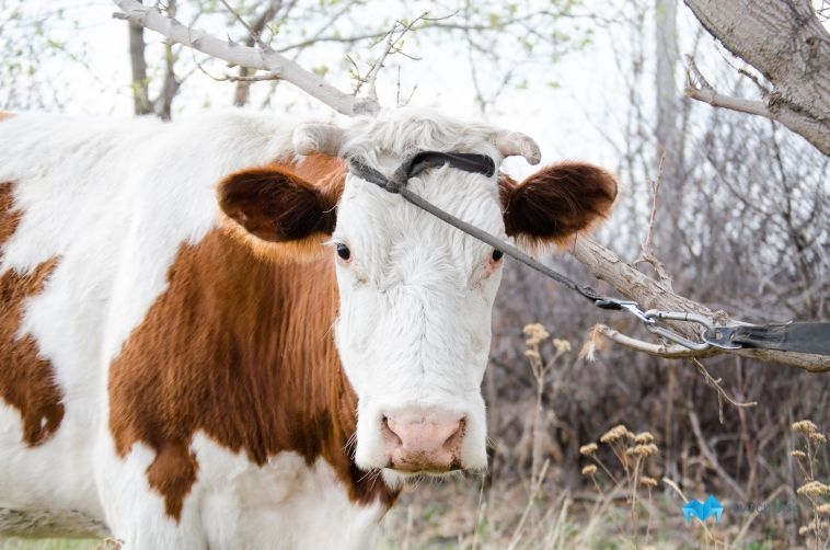 Россельхознадзор назвал животных, от которых можно заразиться бешенством