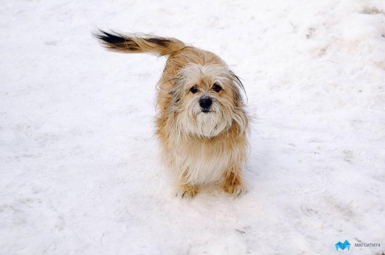 В Челябинской области собака откусила и съела губу ребёнка