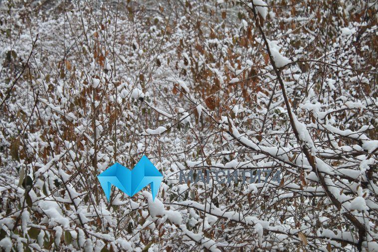 Синоптики предупредили о сильной метели и гололедице