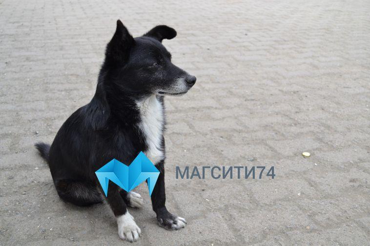 В Челябинской области обнаружили двух животных, больных бешенством